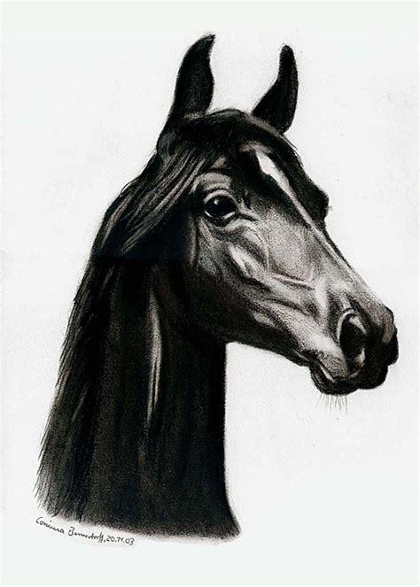 ein araber gezeichnet foto bild tiere haustiere