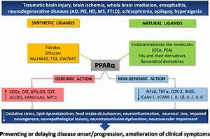 In search for novel strategies towards neuroprotection and ...