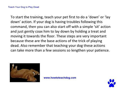how to teach your to play dead teach your dog to play dead a simple step by step guide