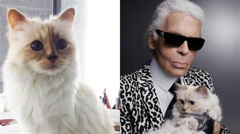 karl lagerfelds cat   receive game changing dyson
