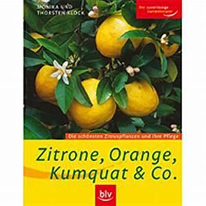 Dünger Für Zitronenbaum : d nger f r zitronenbaum pflanzen f r nassen boden ~ Watch28wear.com Haus und Dekorationen