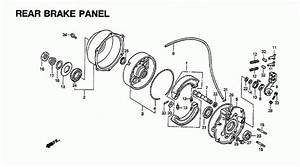 Honda Fourtrax 300 Parts Diagram