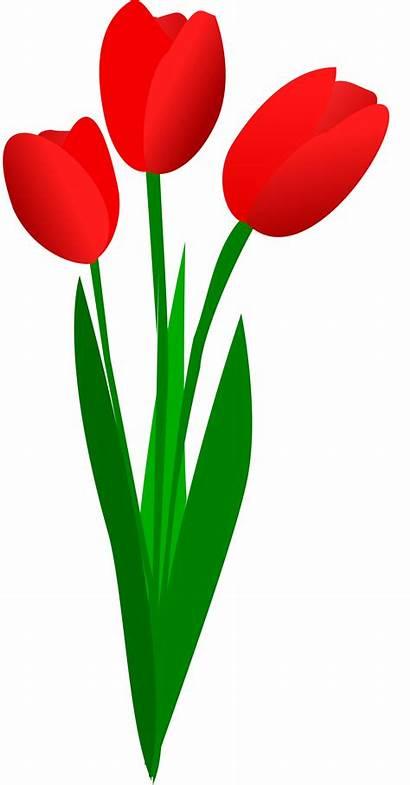 Tulips Three Clipart Svg