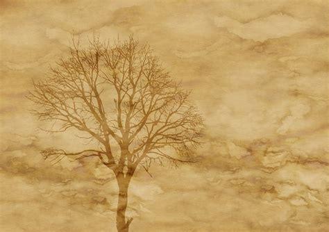 illustration paper parchment tree kahl