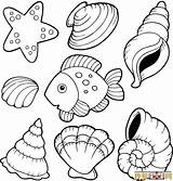 Shell Coloring Pages Oyster Getcolorings Beach Printable sketch template