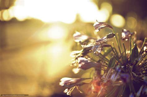 fond d 馗ran bureau tlcharger fond d 39 ecran soleil fond fleurs fleurs fonds d 39 ecran gratuits pour votre rsolution du bureau 2048x1360 image 583995