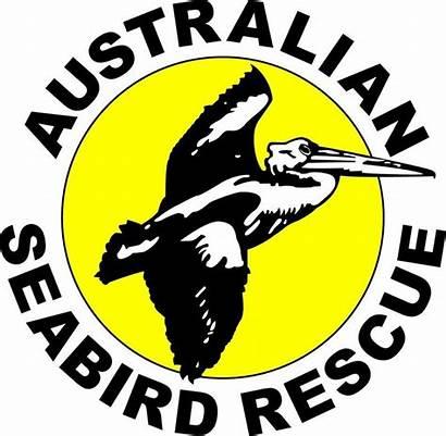 Seabird Australian Rescue Nsw Sea Advocacy Australia