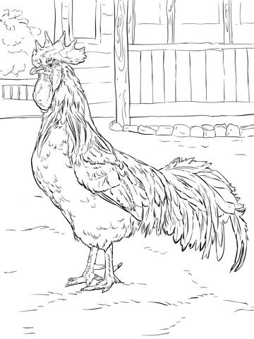 brown leghorn rooster coloring page  printable