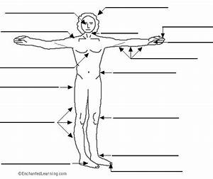 Label The Body  El Cuerpo  In Spanish Printout