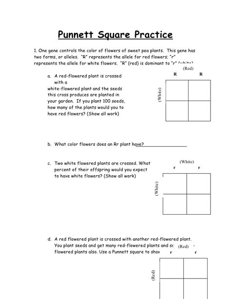 Punnett Square Worksheet Human Characteristics Answers  The Best And Most Comprehensive Worksheets