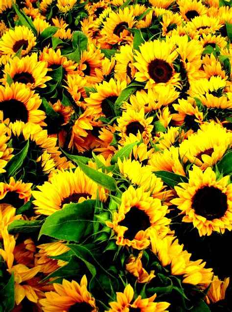 Yellow- the energy vibration of joy, fun, cheerfulness and ...