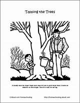 Maple Syrup Coloring Sugaring Sugar Tapping Shack Activities Printables Preschool Trees Sheets Crossword Worksheets Tree Projects Unit Bush Craft Word sketch template