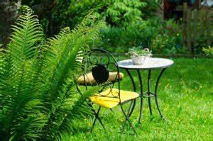 Farn Im Garten : farn vermehren in 3 schritten ~ Orissabook.com Haus und Dekorationen
