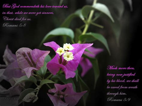 Of The Gods Flowers by Gospel Photography Free Scripture Wallpaper