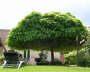 Bäume Und Sträucher Für Den Garten : schattenspendende b ume im garten pflanzen garten ~ Michelbontemps.com Haus und Dekorationen