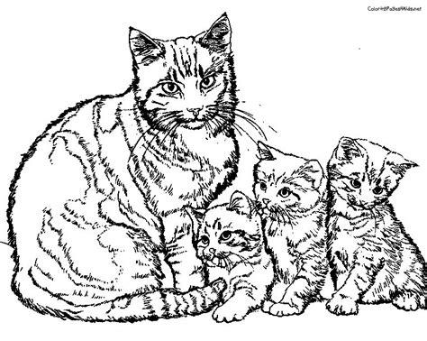 malvorlagen fur kinder ausmalbilder katze kostenlos
