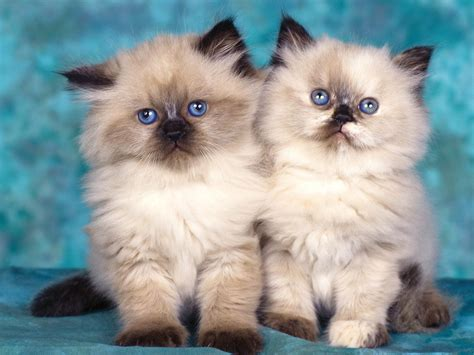 65 Innocent Cute Cats High Resolution Wallpapers