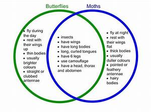 Also Butterfly Caterpillars Turn Into Chrysalis  U0026quot Naked