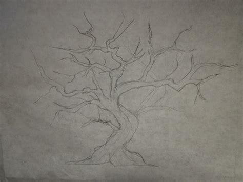Sakura Tree Drawing Pencil Wwwpixsharkcom Images