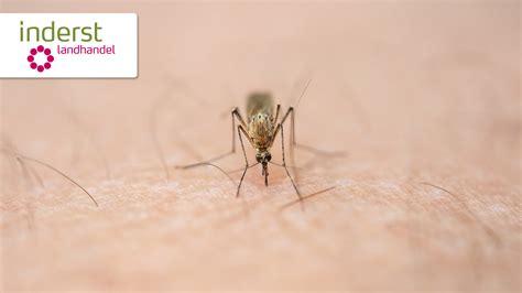 Tipps Gegen Mücken by 7 Wirksame Tipps Gegen M 252 Cken Inderst