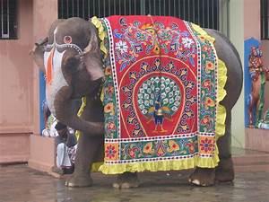 Saree Dreams: Indian Elephant