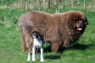 Top Dogs That Dont Shed Hair by Quot Dogs Of The World Quot Grouped By Their Geographic Origins