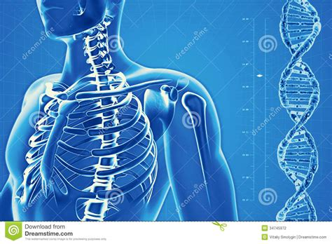 Human Skeleton On High Tech Background Stock Photography