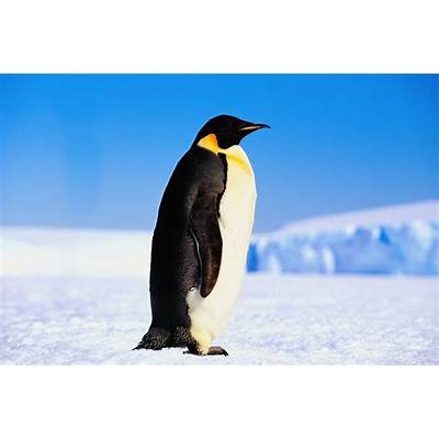 Hungry for God: The Prodigal and the Penguin