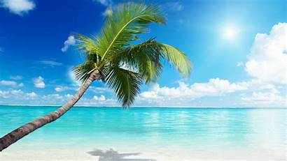 Beach Wallpapers Background Palm Tree Awesome