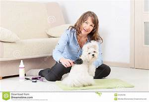 dog grooming at home royalty free stock photo image With dog grooming at home