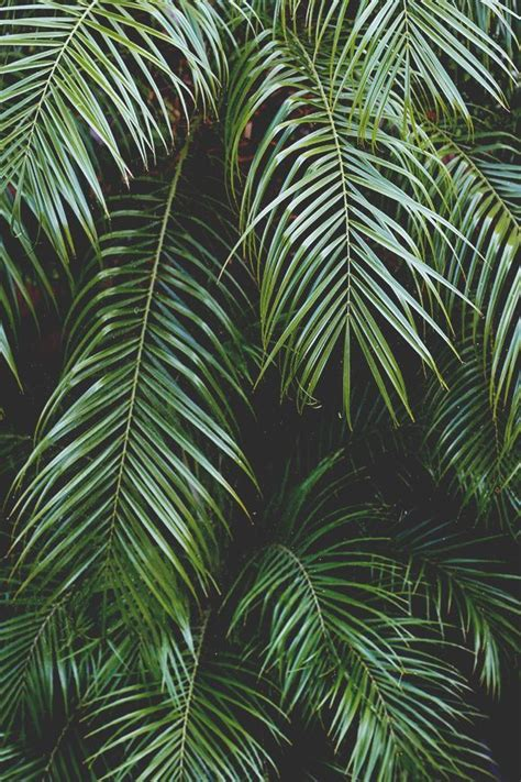 Palm Background Best 25 Palm Background Ideas On Tropical