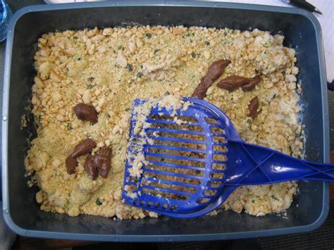 litter box cake an ode to poo dogpaddling through