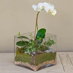 Orchidee Blüht Nicht Mehr : zimmeerpflanzen orchidee terrarium pflege wei e bl ten ~ Lizthompson.info Haus und Dekorationen