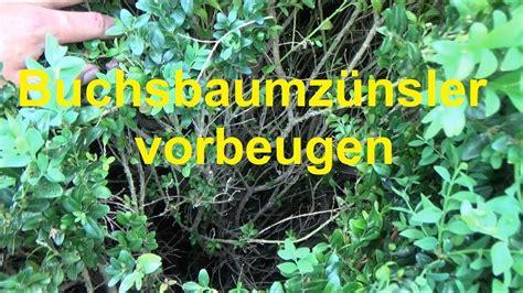 Im Buchsbaum Bekämpfen by Buxbaumz 252 Nsler Bek 228 Mpfen Backpulver Tz25 Casaramonaacademy