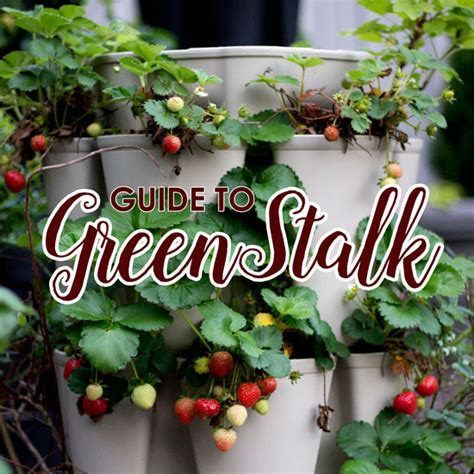 Can You Grow In A Vertical Garden by Our Greenstalk Vertical Garden A Vertical Garden