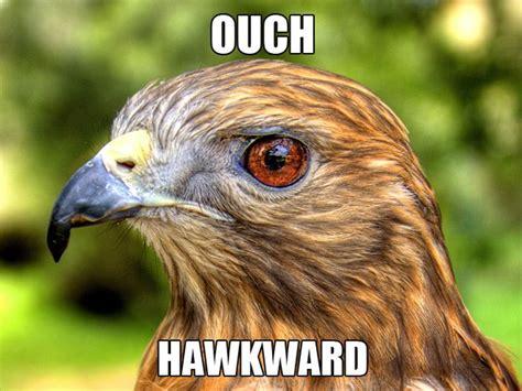Hawkward Meme - the funniest animals ouch hawkward