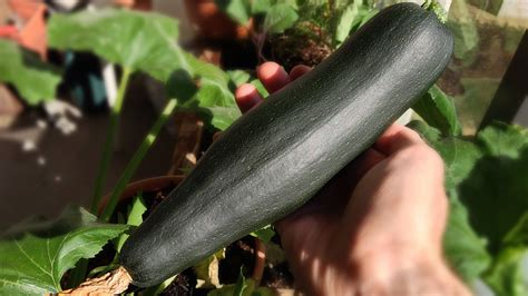 Why a German Zucchini Had Police Rushing to the Scene