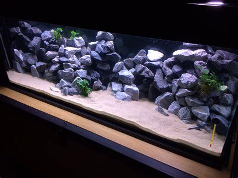 news de pr 233 sentations de votre vos aquarium s page 15