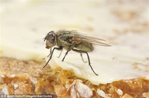 fly cuisines should you throw away food if a fly lands on it daily