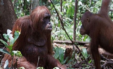 Tv Weekly Now  Rarely Seen Animal Behavior Captured In