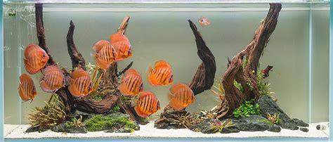 The 10 Best Aquascaping Fish  Aquarium Info
