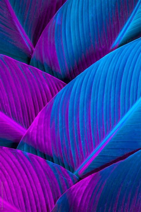 Holographic palm pattern/background by Wizemark Colorful