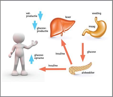 hoe ontstaat diabetes