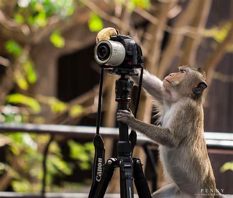 animales  quieren ser fotografos