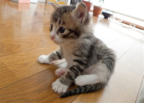 Cute Kittens (20 Great Pictures)  Kitty Bloger