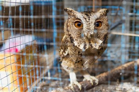 Images For Owls