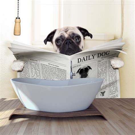 funny animal wall mural pug dog photo wallpaper bathroom
