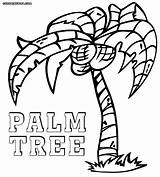 Palm Tree Coloring Cartoon Pages Drawing Getdrawings sketch template