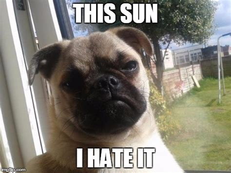 Grumpy Dog Meme - grumpy dog imgflip