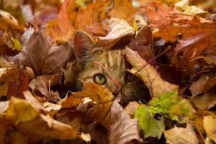 Image result for images of happy cats in Autumn